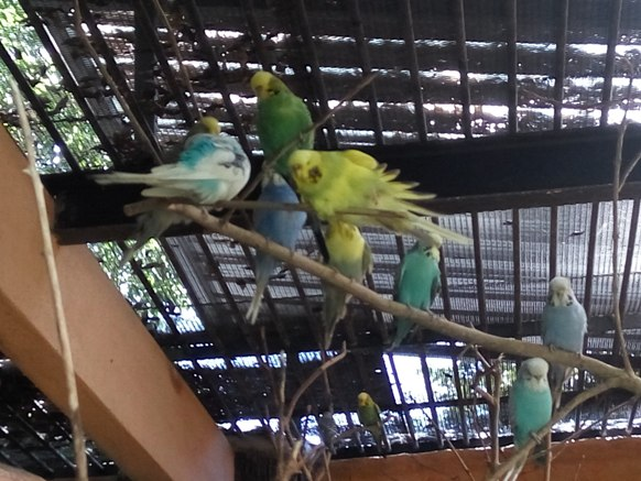 aviari burung