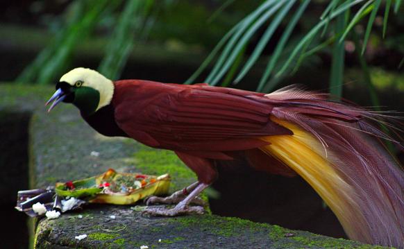 burung yang di lindungi di indonesia