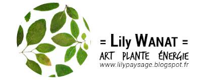 Logo Lily Wanat
