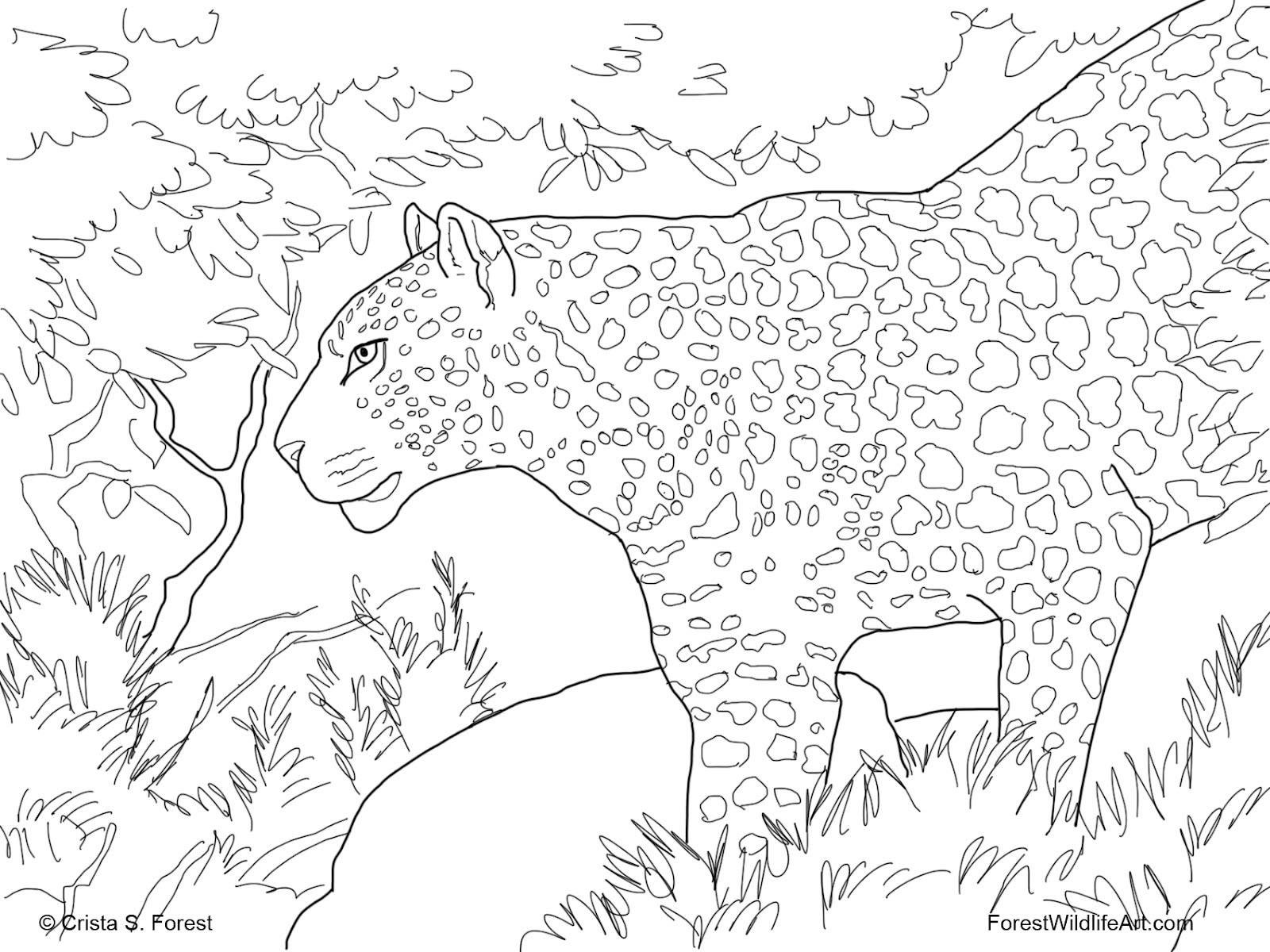 wild cats coloring pages print - photo#27