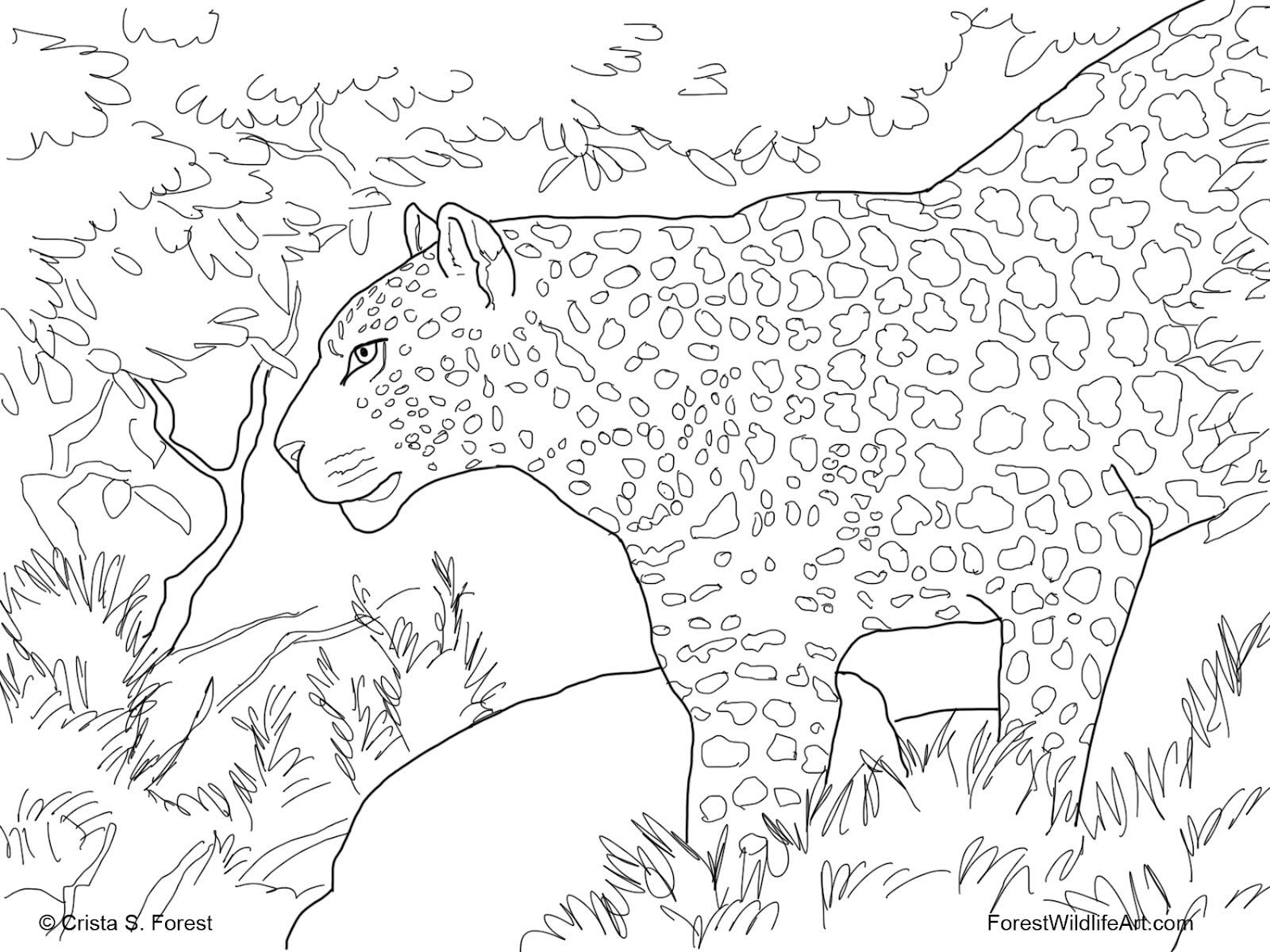 Crista Forest's Animals & Art: 9/1/12 - 10/1/12