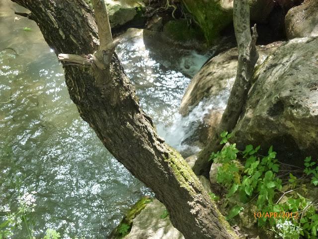 בריכה בנחל עמוד
