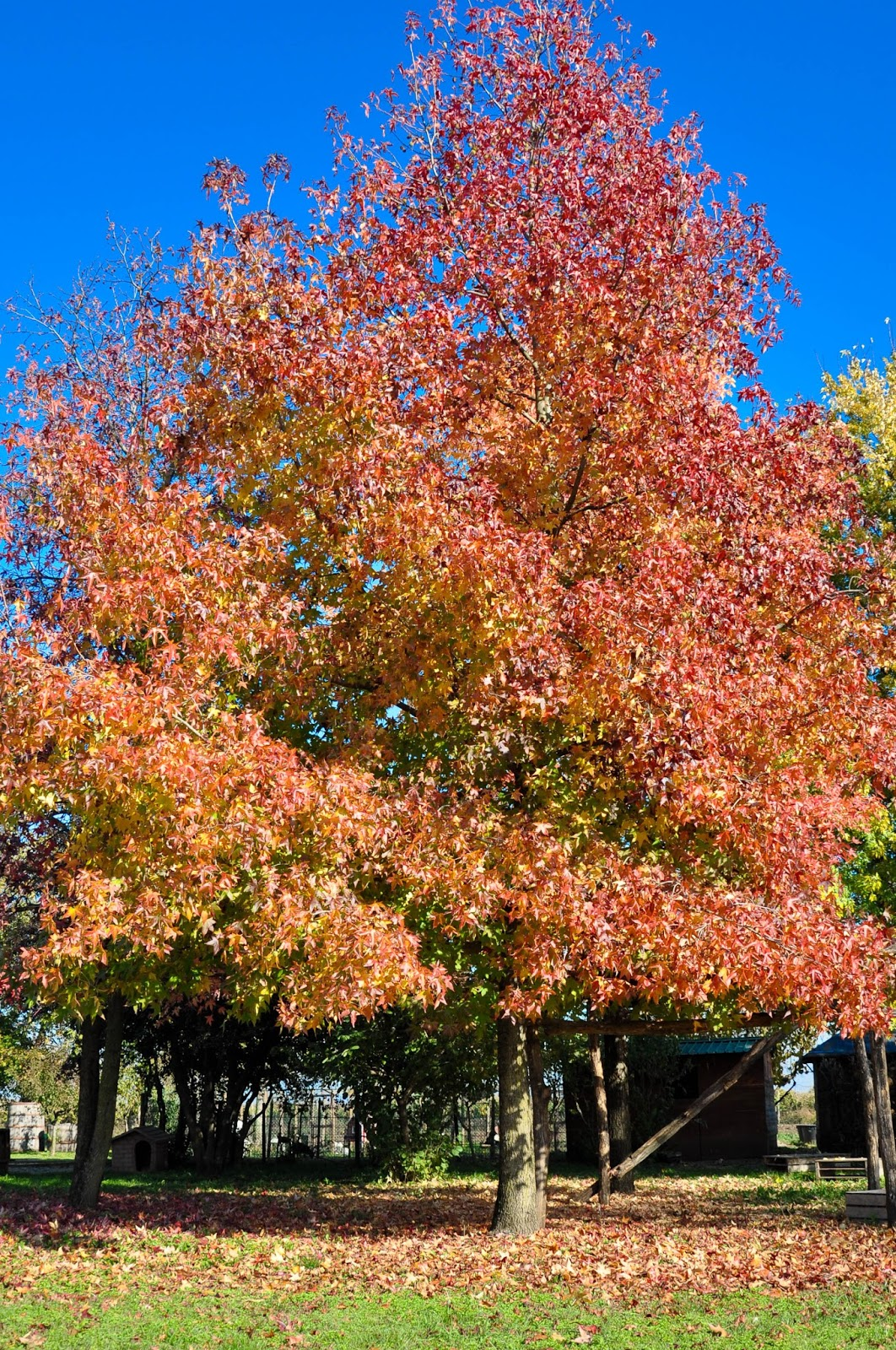 Atumnal tree, Agriturismo La Borina, Veneto, Italy