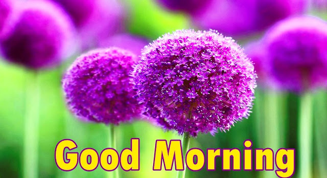 good morning flowers photos
