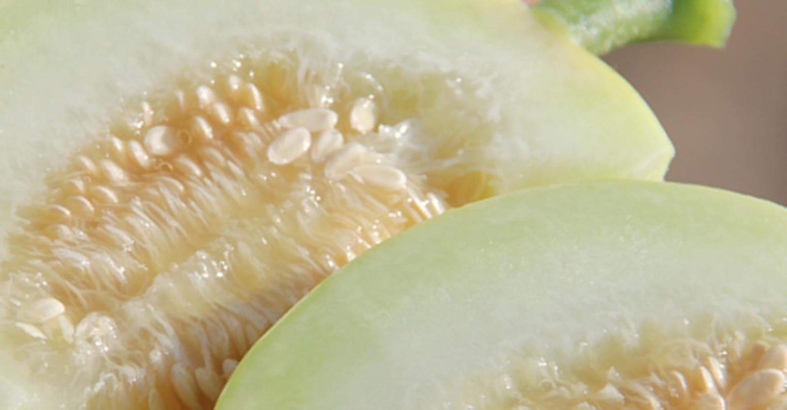 Manfaat Sehat Buah Melon (Cucumis melo)