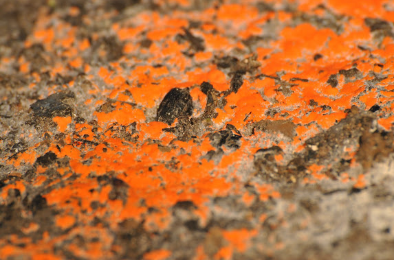 Orange Mold Type, Identify, Facts, and How to Remove