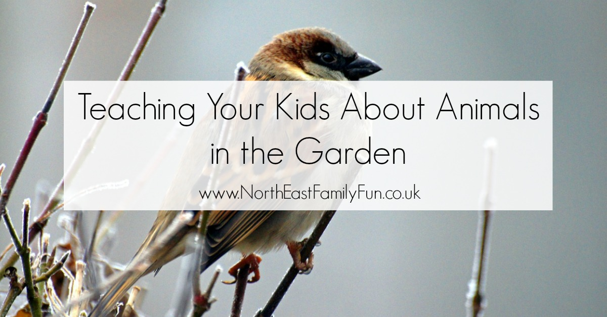3 Ways to Teach Your Kids about Animals in the garden including how to create a bird feeder, how to identify birds and how to build your very own worm farm.