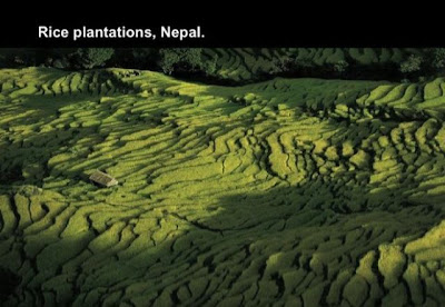 Plantación de arroz en Nepal