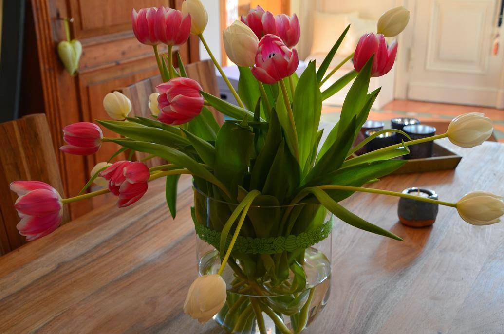 Felix-traumland: Tulpen, Tulpen Und Noch Mal Tulpen