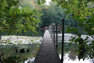 Ein See, in den ein Steeg hineinreicht. Am Ende des Stegs befindet sich eine hölzerne Plattform mit einer Bank. Der Steg ist von Bäumen und Seerosen umgeben