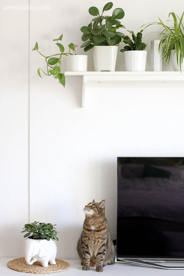 aentschies blog pflanzen und katzen kein problem kleines giveaway. Black Bedroom Furniture Sets. Home Design Ideas