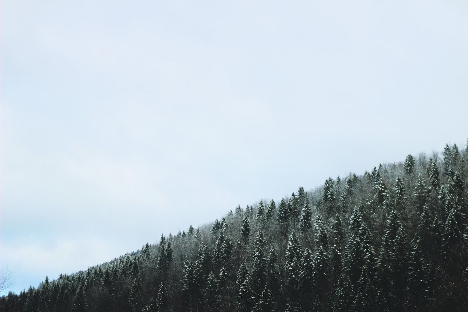 filipa canic blog, youarethepoet, you are the poet blog, forest, winter,