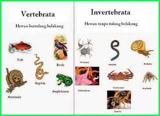 contoh hewan bertulang belakang vertebrata dan hewan tidak bertulang  invertebratabelakang.