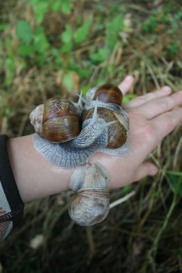 Qu'est Ce Qui Attire Les Escargots : qu'est, attire, escargots, Cultiver, Limaces, Escargots