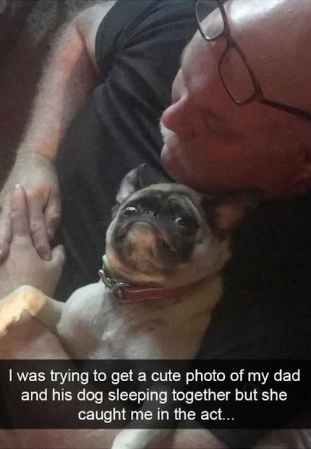 Cute Dog Memes Viral Online 7