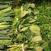 Manfaat Konsumsi Sayuran Hijau bagi Kesehatan