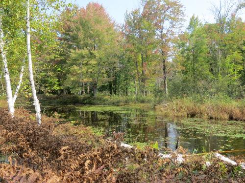 Midland to Mackinac Trail pond
