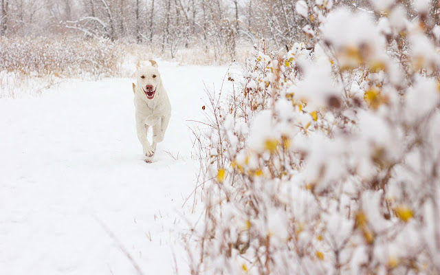 Winterfoto met een witte hond in de sneeuw