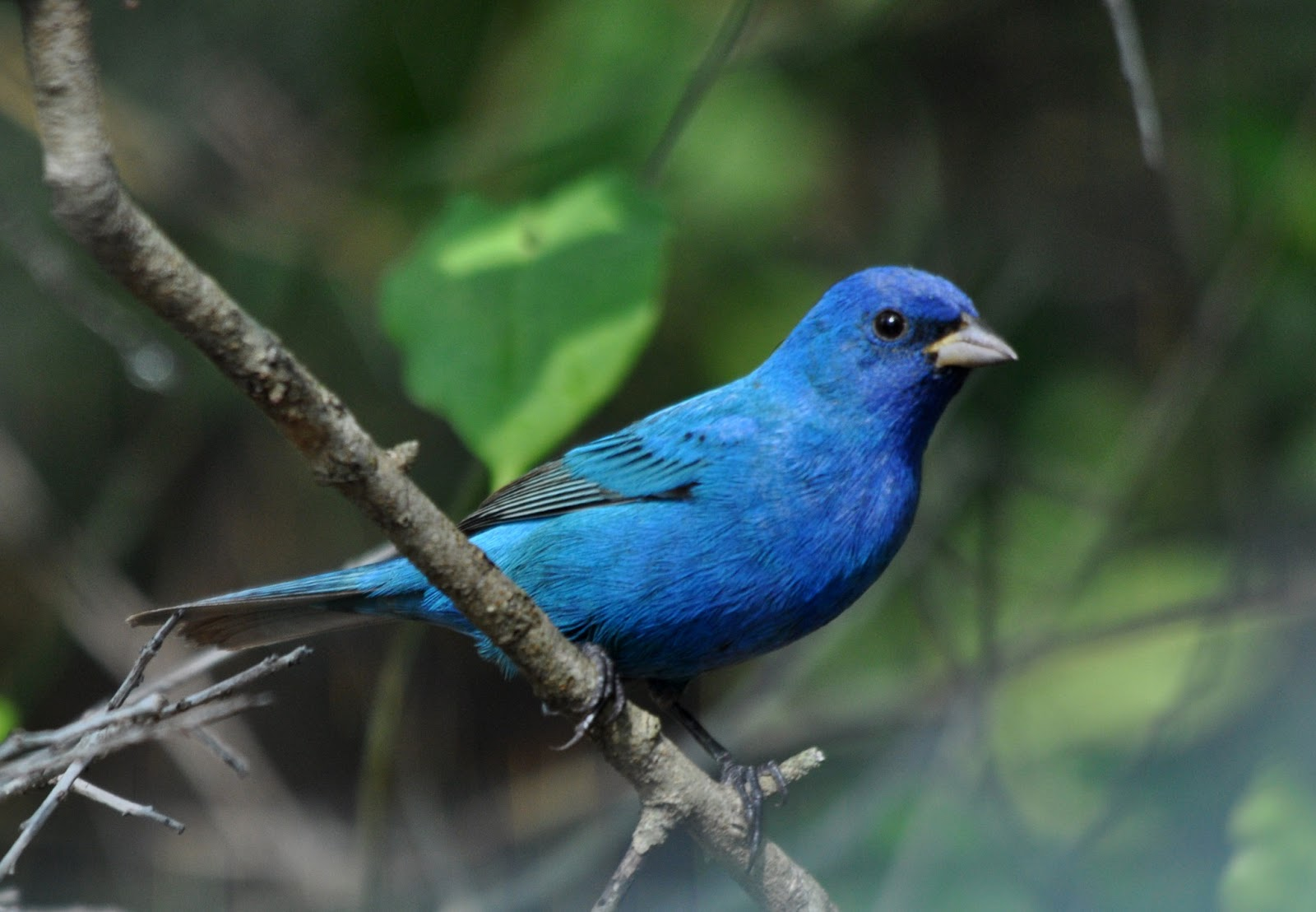 Jersey Birder May 2013