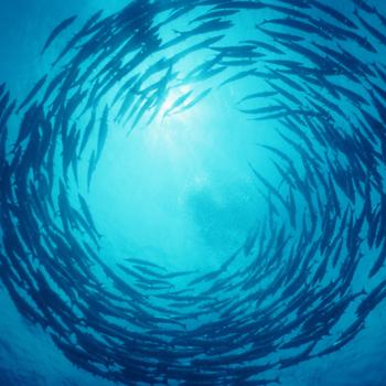 Ikan bertawaf