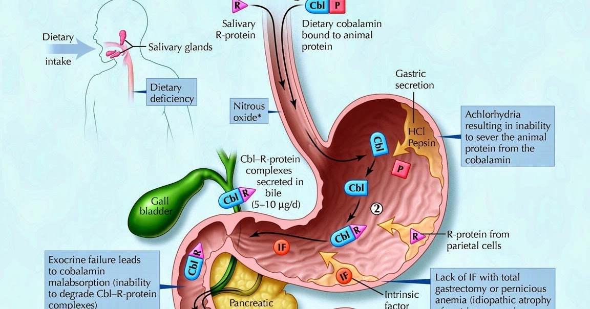 My Gastro Room: Question B12 metabolism