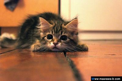صور صور قطط كيوت 2020 خلفيات قطط جميلة جدا cats7.png