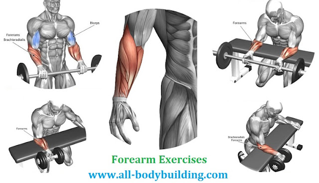 The Four Best Forearm Exercises - all-bodybuilding.com