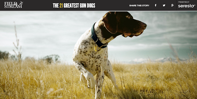 21 greatest gun dog list from field and stream