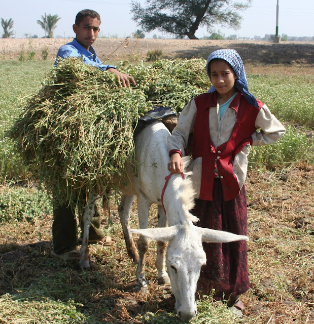 The agricultural sector is the largest employer of children worldwide, accounting for 70 percent of global child labor.