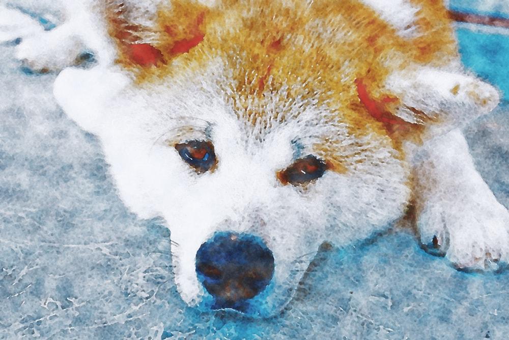 水彩画の柴犬