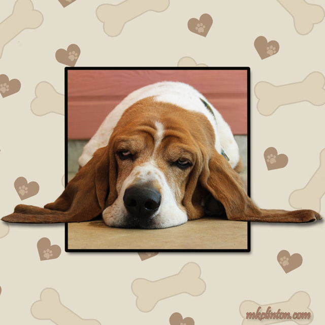 Basset Hound with long ears out beside him in a heart frame