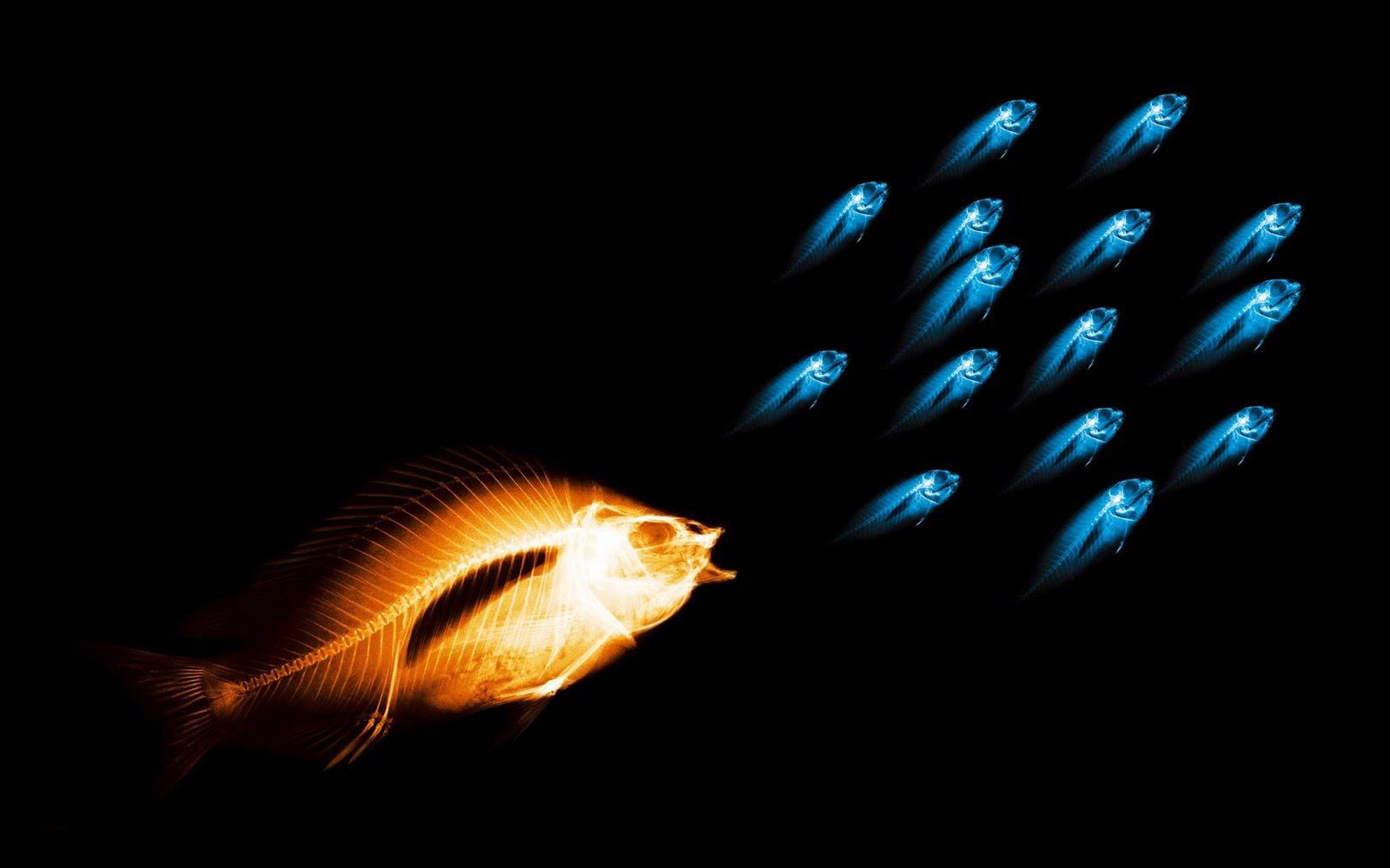 Imagem De Fundo  Peixes Luminosos Imagens