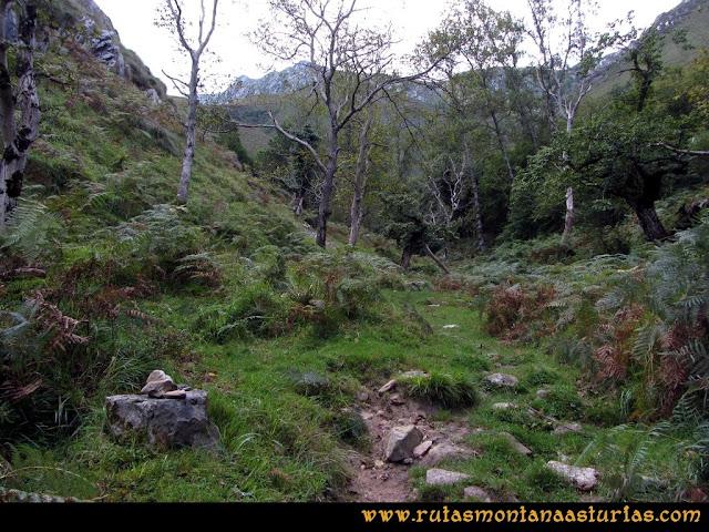 Ruta al Cabezo Llerosos desde La Molina: Subiendo por zona boscosa