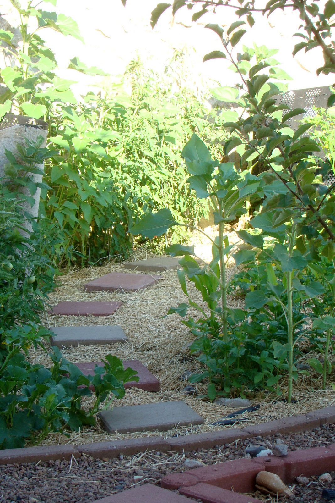 deep mulch gardening, nourished and nurtured: tips for planting the summer vegetable, Design ideen