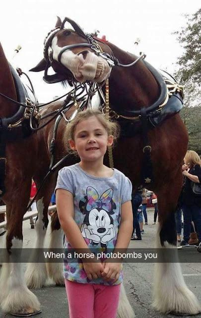 horse photobomb little girl, funny photobombs, animal photobomb, funny horse picture