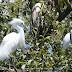 Las galeriowy - oaza kolumbijskiej sawanny