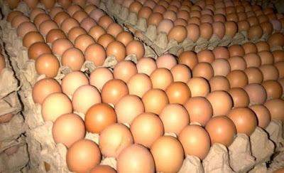 Peluang Usaha Agen Telur Ayam