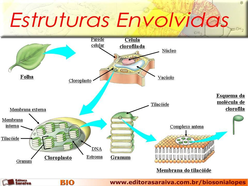 BIOLOGIA COM A PROFESSORA EDILENE: METABOLISMO ENERGÉTICO..