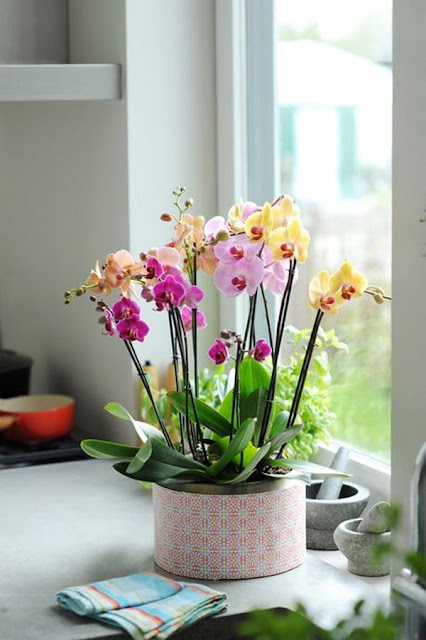 Decorate Your Interior With Orchids 6
