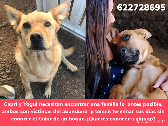 NECESITAN ADOPCIÓN URGENTE -BRAUCHEN DRINGEND EIN ZUHAUSE- THEY NEED URGENTLY A FAMILY