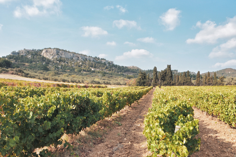 Mas Sainte Berthe - domaine viticole