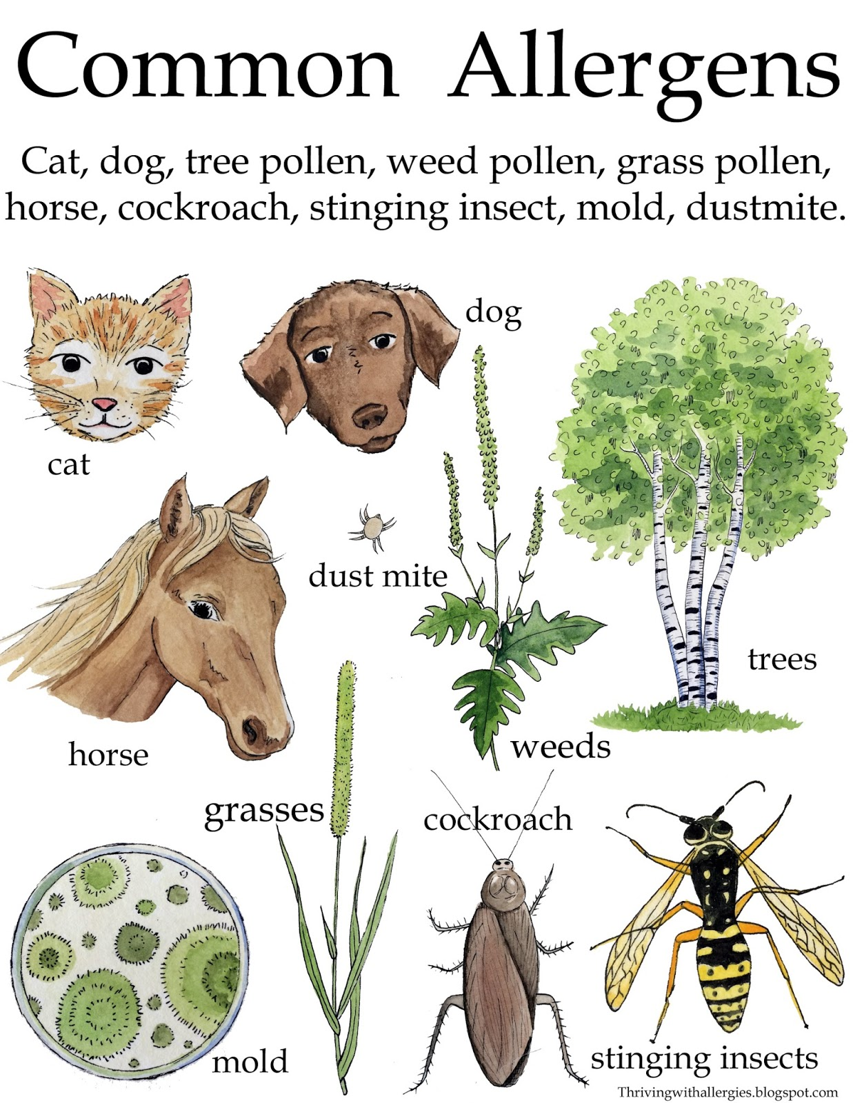 Image result for allergies blogspot.com