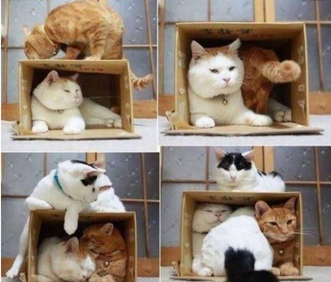 carton et chat 28