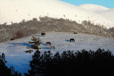 cavalli pescasseroli abruzzo