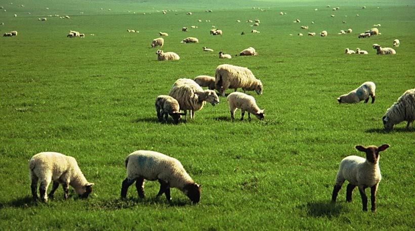 Όλα όσα πρέπει να γνωρίζουν οι κτηνοτρόφοι για την ασφάλιση ζωικού κεφαλαίου