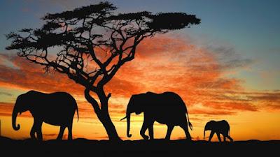 Camile Saint-Säens elefantea