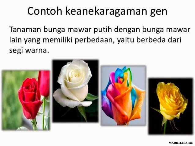 Contoh Keanekaragaman Gen, Biologi Keanekaragaman Hayati, keanekaragaman hayati indonesia.