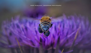Nikos Kokolakis Beekeeping Photography