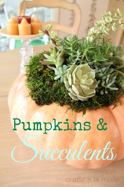 Succulents and Pumpkins