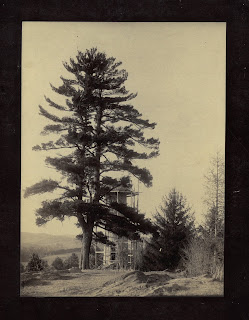 Image of Old Pine with Bartlett Tower under construction